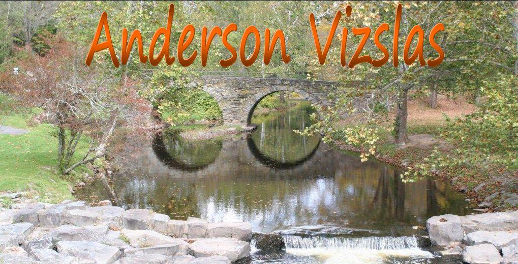 Anderson Vizslas